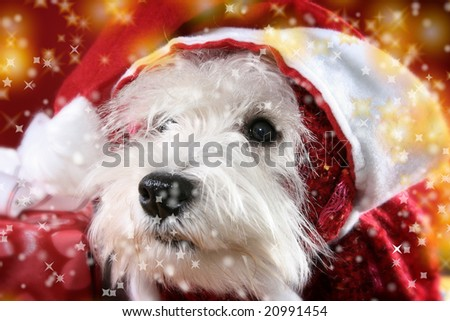 Cute white puppy with present and snowflakes. - stock photo