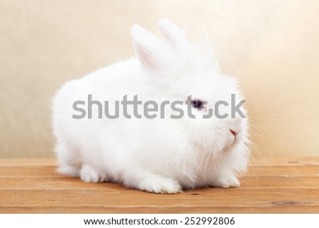 Cute white rabbit on wooden surface against golden background- shallow depth of field - stock photo