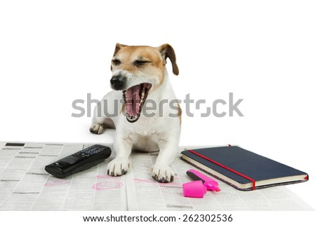 Cute yawn Dog Jack Russel terrier tired looking for a job. Newspaper advertisement, phone and notebook with glasses - stock photo