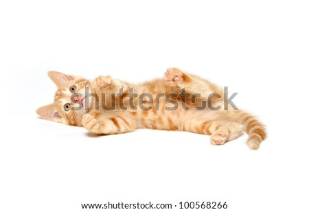 Cute yellow cat on a white background - stock photo