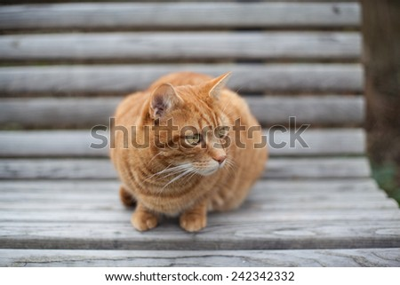 Cute yellow cat on the chair staring attentively on the side - stock photo