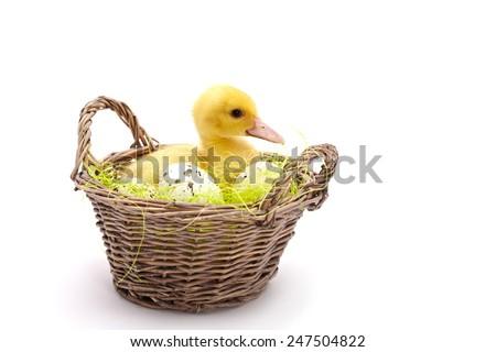 Cute yellow duck. - stock photo