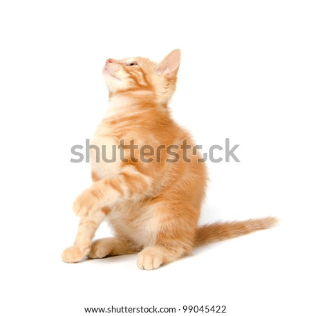Cute yellow kitten on a white background