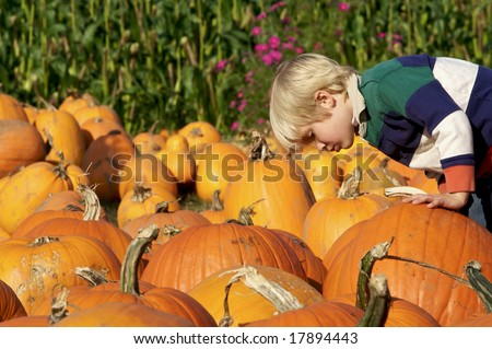 Cute young boy looking at a pumpkin at the pumpkin patch - stock photo