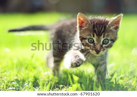 Cute young cat walking on grass - stock photo