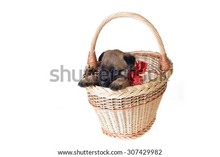 Cute young puppy in basket on white  background - stock photo