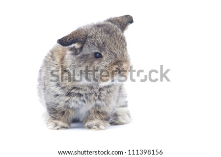 Cute young rabbit on white background - stock photo