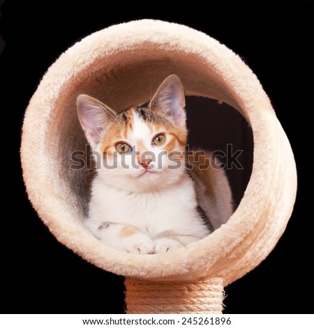 Cute young tabby cat laying on scratching post against black background - stock photo