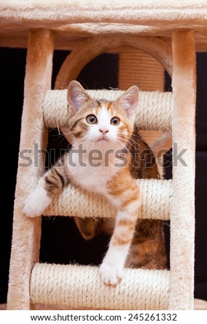 Cute young tabby cat on scratching post against black background - stock photo