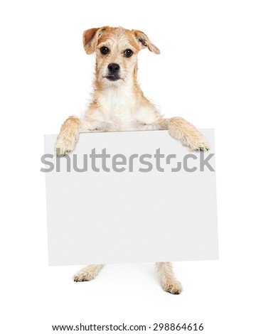 Cute young terrier mixed breed dog standing up and holding a blank white sign to enter your text onto - stock photo