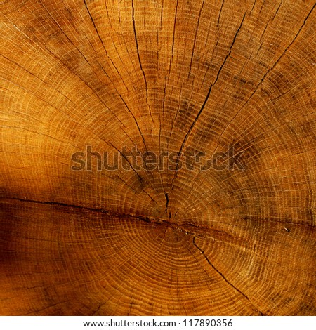 cutted tree texture - stock photo