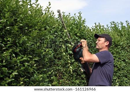 Cutting a hedge, gardening - stock photo