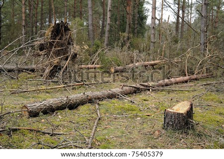 cutting forest - stock photo