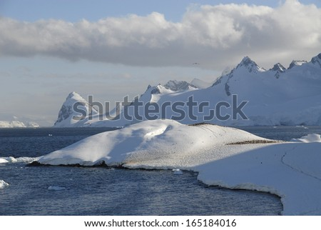 Cuverville Island, Antarctic Peninsular - stock photo