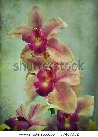 Cymbidium flower - stock photo