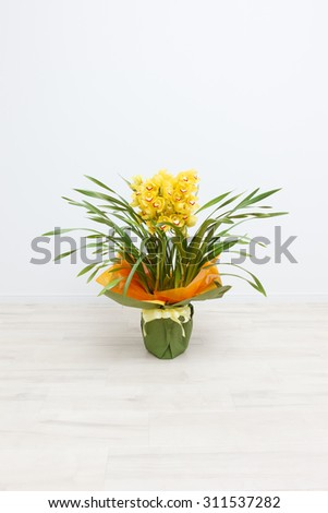 Cymbidium it is placed into a white room