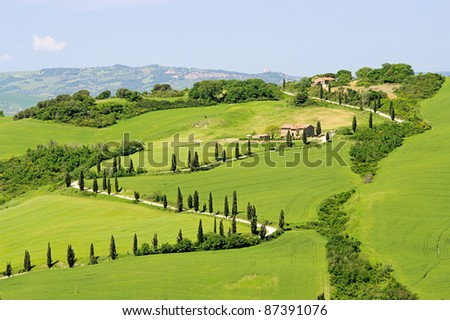 cypress curve - stock photo