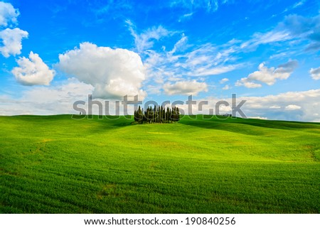 Cypress group and rolling field rural landscape in Orcia valley, San Quirico, Siena, Tuscany. Italy - stock photo