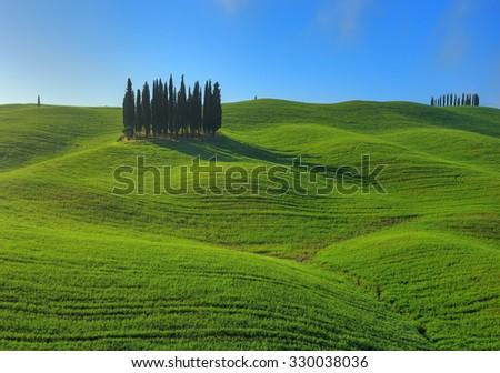Cypress grove on the hill. Tuscany, Italy - stock photo