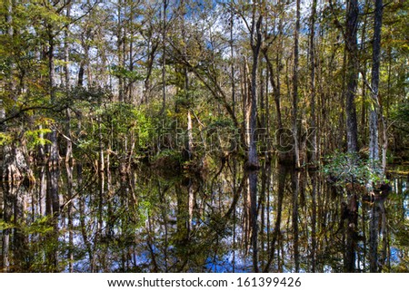Cypress of the Everglades reflecting in a swamp, Florida, USA - stock photo