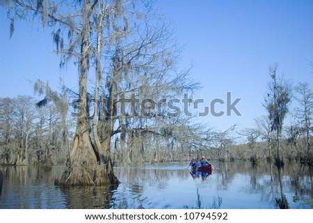 cypress swamp with blue sky, bayou - stock photo