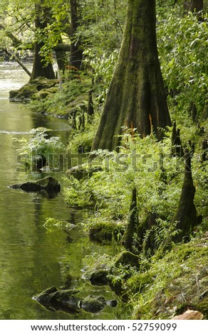 Cypress Tree Lined River Bank in Springtime - stock photo