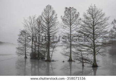 Cypress trees frozen in ice and shrouded in fog at Stumpy Lake in Virginia Beach, Virginia.    - stock photo