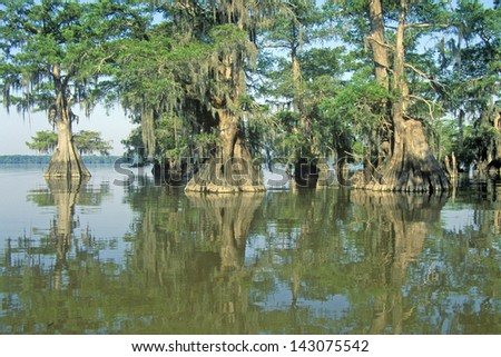 Cypress Trees in the Bayou, Lake Fausse Pointe State Park, Louisiana - stock photo