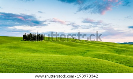 Cypress trees in Tuscany, green hills and landscape at sunset - panorama, Italy