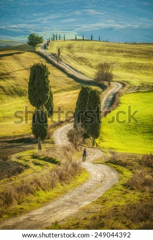 Cypress trees on the road to a farmhouse in the Tuscan landscape with blue sky in the background - stock photo