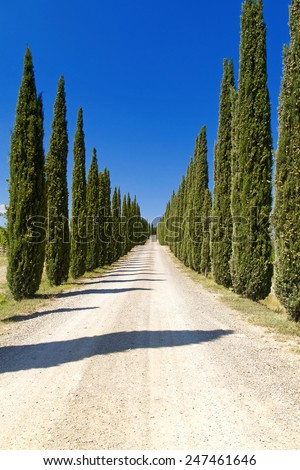 Cypress Trees rows and a white road rural landscape in Montalcino land near Siena, Tuscany, Italy, Europe. - stock photo