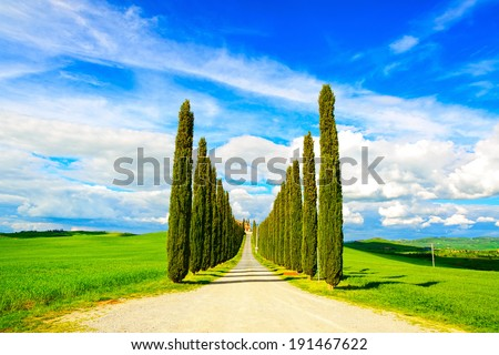 Cypress Trees rows and a white road rural landscape in val d Orcia land near Siena, Tuscany, Italy, Europe. - stock photo