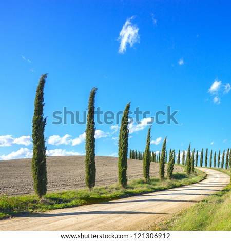Cypress Trees rows and a white road typical landscape in Crete Senesi land near Siena, Tuscany, Italy, Europe. - stock photo