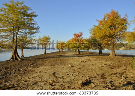 cypress trees, showing a hint of fall color, growing along a sandbar in the middle of the Tennessee River (Hiwassee River area) during the Autumn lake level drop - stock photo