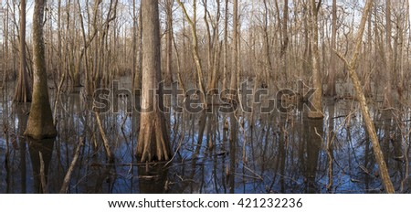 Cypress wetlands in the Suwanee River in Florida - stock photo
