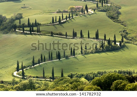 Cypresses along a curving road in Tuscany near Al Foce - stock photo