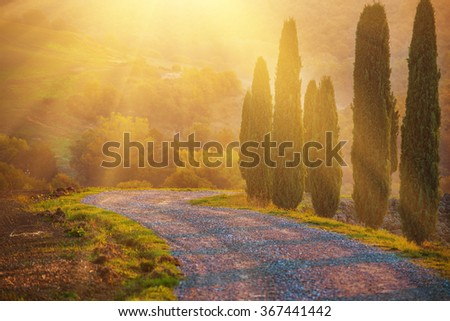 Cypresses and the road in Tuscany, Italy at sunrise, natural golden sunny autumn european background  - stock photo