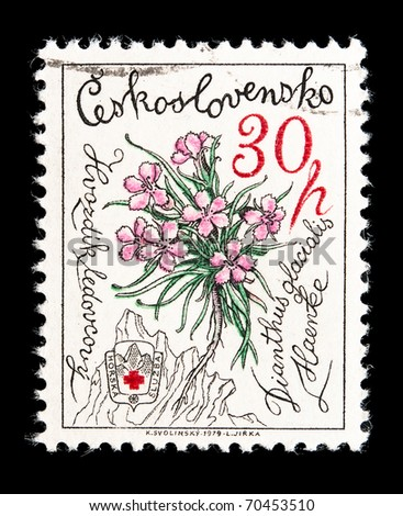 CZECHOSLOVAKIA - CIRCA 1979: A stamp printed in Czechoslovakia showing Dianthus glacialis carnation flowers, circa 1979