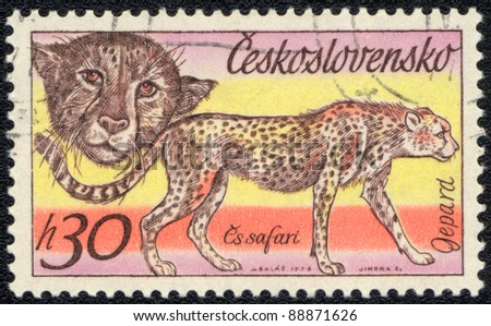 CZECHOSLOVAKIA - CIRCA 1976: A stamp printed in CZECHOSLOVAKIA  shows Cheetah, series, circa 1976 - stock photo