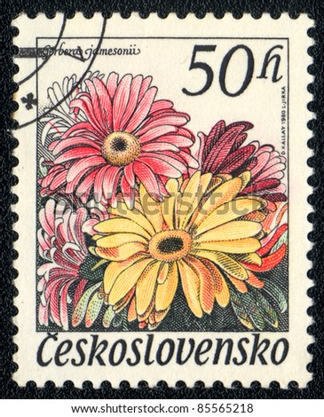 CZECHOSLOVAKIA - CIRCA 1980: A stamp printed in Czechoslovakia shows image of a gerbera jamesonii, series, circa 1980 - stock photo