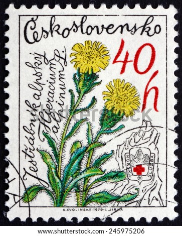 CZECHOSLOVAKIA - CIRCA 1979: a stamp printed in the Czechoslovakia shows Hawkweed, Hieracium Alpinum, Mountain Flower, circa 1979 - stock photo