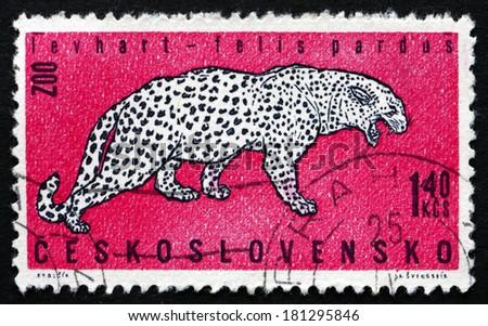 CZECHOSLOVAKIA - CIRCA 1962: a stamp printed in the Czechoslovakia shows Leopard, Felis Pardus, Zoo Animal, circa 1962 - stock photo