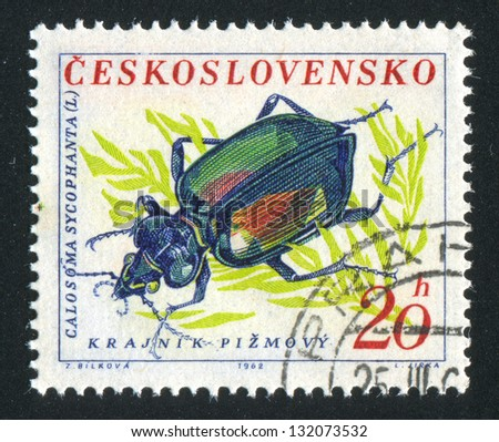 CZECHOSLOVAKIA - CIRCA 1962: stamp printed by Czechoslovakia, shows Ground Beetle, circa 1962