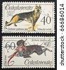 CZECHOSLOVAKIA - CIRCA 1965: two stamps printed in Czechoslovakia shows images of German Shepherd and Chesky Fousek, a typical Czech gun dog. Czechoslovakia, circa 1965 - stock photo