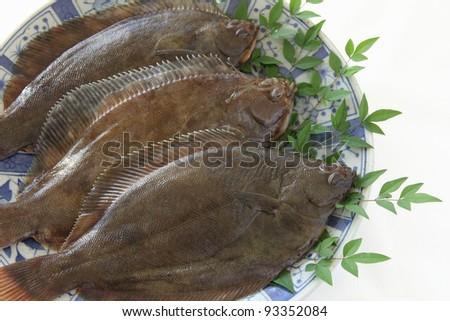 Dab flatfish - stock photo