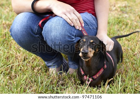 Dachshund dog and owner - stock photo