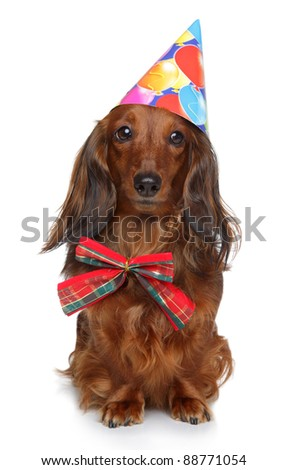 Dachshund puppy in party cone and red bow on a white background