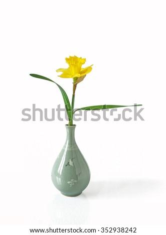 Daffodil n a Japanese Vase on white background  - stock photo