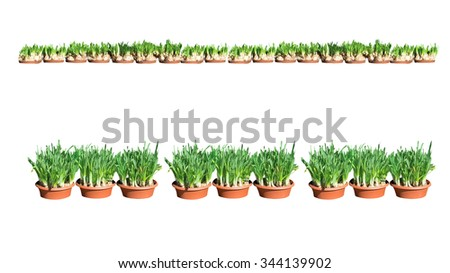 Daffodil pots border. Border with daffodils isolated on white.