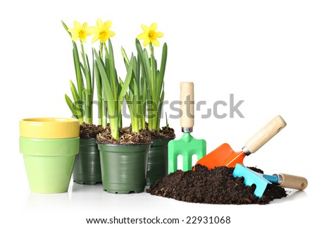 Daffodils and gardening tools. - stock photo